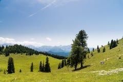 束在夏天山的树 免版税库存图片
