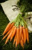 束在大袋的被收获的新鲜的红萝卜 免版税库存图片