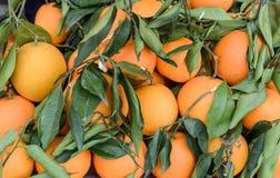 束在市场上的新鲜的桔子 免版税库存照片
