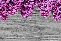 束在木灰色桌的上面的新鲜的紫罗兰色淡紫色花 库存照片