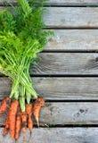 束在木背景的新鲜的红萝卜 免版税图库摄影