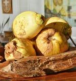 束在板材的椰子 免版税图库摄影