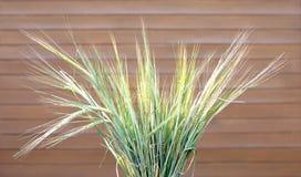 束在棕色木墙壁的许多成熟麦子耳朵 免版税图库摄影