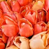 束在特写镜头,桃子,桃红色的郁金香,红色 免版税图库摄影