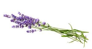 束在白色背景的淡紫色花 免版税库存图片