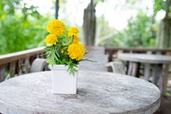 束在白花罐的黄色万寿菊花在木桌上 免版税库存图片