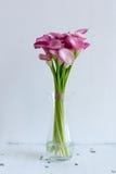 束在花瓶的桃红色水芋属 库存照片