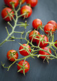 束在藤的红色西红柿 图库摄影