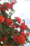 束在迷离背景的红色花揪与bokeh 库存图片