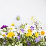束夏天狂放的草甸floweres 免版税库存图片