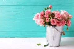 束嫩桃红色玫瑰在罐开花 库存照片