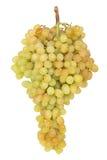 束成熟和水多的绿色葡萄 免版税库存照片