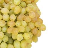 束成熟和水多的绿色葡萄 图库摄影