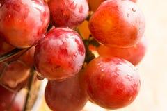 束成熟新鲜的红色或桃红色水多的葡萄用水在铁丝网筐下降,垂悬在边缘,阳光,宏指令 免版税库存图片