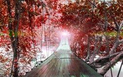 结束或球门线概念 光在垂悬有幻想红色树的各种各样的类型的透视结束时木桥 库存照片