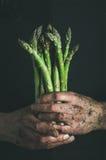 束新鲜的未煮过的季节性芦笋在肮脏的人` s手上 免版税库存图片