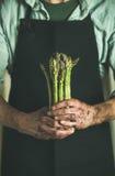 束新鲜的未煮过的季节性芦笋在肮脏的农夫` s手上 库存图片