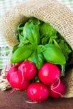 束新鲜的萝卜在布料袋子的新的收获 免版税图库摄影
