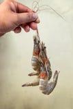 束新鲜的虾 免版税库存照片