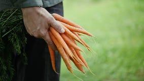 束有机红萝卜在农夫手上 股票录像