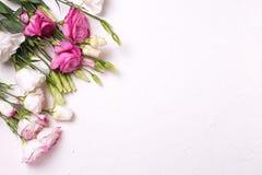 束桃红色和白色南北美洲香草在白色织地不很细backgr开花 库存图片