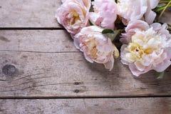 束桃红色牡丹在年迈的木背景开花 库存图片