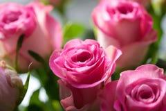 束桃红色玫瑰 免版税库存图片