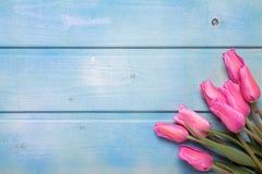 束桃红色郁金香在蓝色木背景开花 库存图片