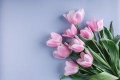 束桃红色郁金香在蓝色背景开花 等待的春天 看板卡愉快的复活节 库存图片
