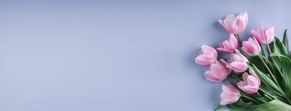束桃红色郁金香在蓝色背景开花 等待的春天 看板卡愉快的复活节 免版税库存图片