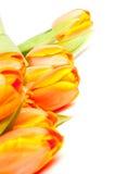 束橙色郁金香黄色 免版税库存图片