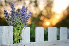 束淡紫色在夏天晚上日落开花 库存图片