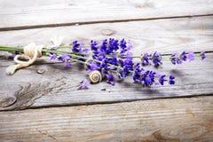 束淡紫色开花与在一张老木桌上的蜗牛 免版税库存照片