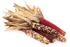 束玉米印地安人 库存图片