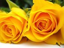 束玫瑰黄色 库存照片