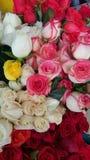 束玫瑰 免版税库存图片