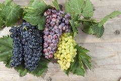 束白色和红葡萄 免版税库存图片