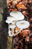 束白色蘑菇 免版税图库摄影