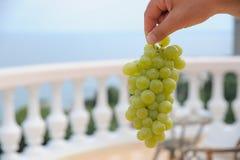 束白葡萄在他的手上在大阳台俯视 免版税库存图片