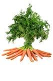 束红萝卜 库存图片