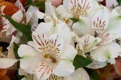 束美丽的白花 免版税库存图片