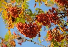束花揪在秋天 免版税库存照片