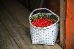 束花揪在篮子的秋天季节收集了 库存图片