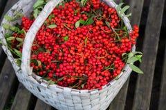 束花揪在篮子的秋天季节收集了 图库摄影