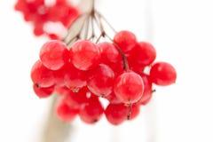 束花揪莓果  图库摄影
