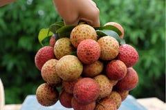 束荔枝果子或lychee果子 图库摄影