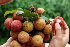 束荔枝果子或lychee果子 免版税库存照片