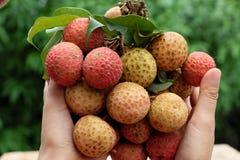 束荔枝果子或lychee果子 库存图片
