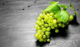 束葡萄绿色例证可实现的向量 免版税图库摄影