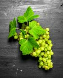 束葡萄绿色例证可实现的向量 免版税库存图片